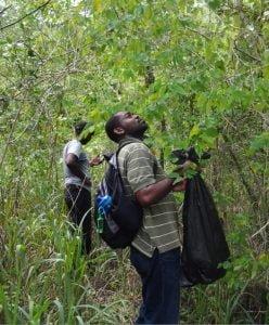 Keron Campbell and Dr Philip Rose botanising on Long Mountain
