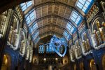 The Natural History Museum in London. THOMAS QUINE/CC BY 2.0